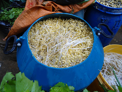 Chinese Bean Sprouts