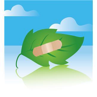Bandaged Leaf