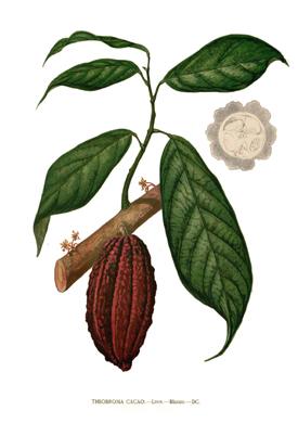 Cacao Has Highest Magnesium
