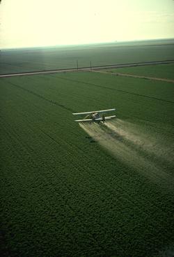 Perils Of Certain Pesticides